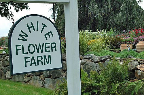 White Flower Farm in Litchfield Connecticut - Photo
