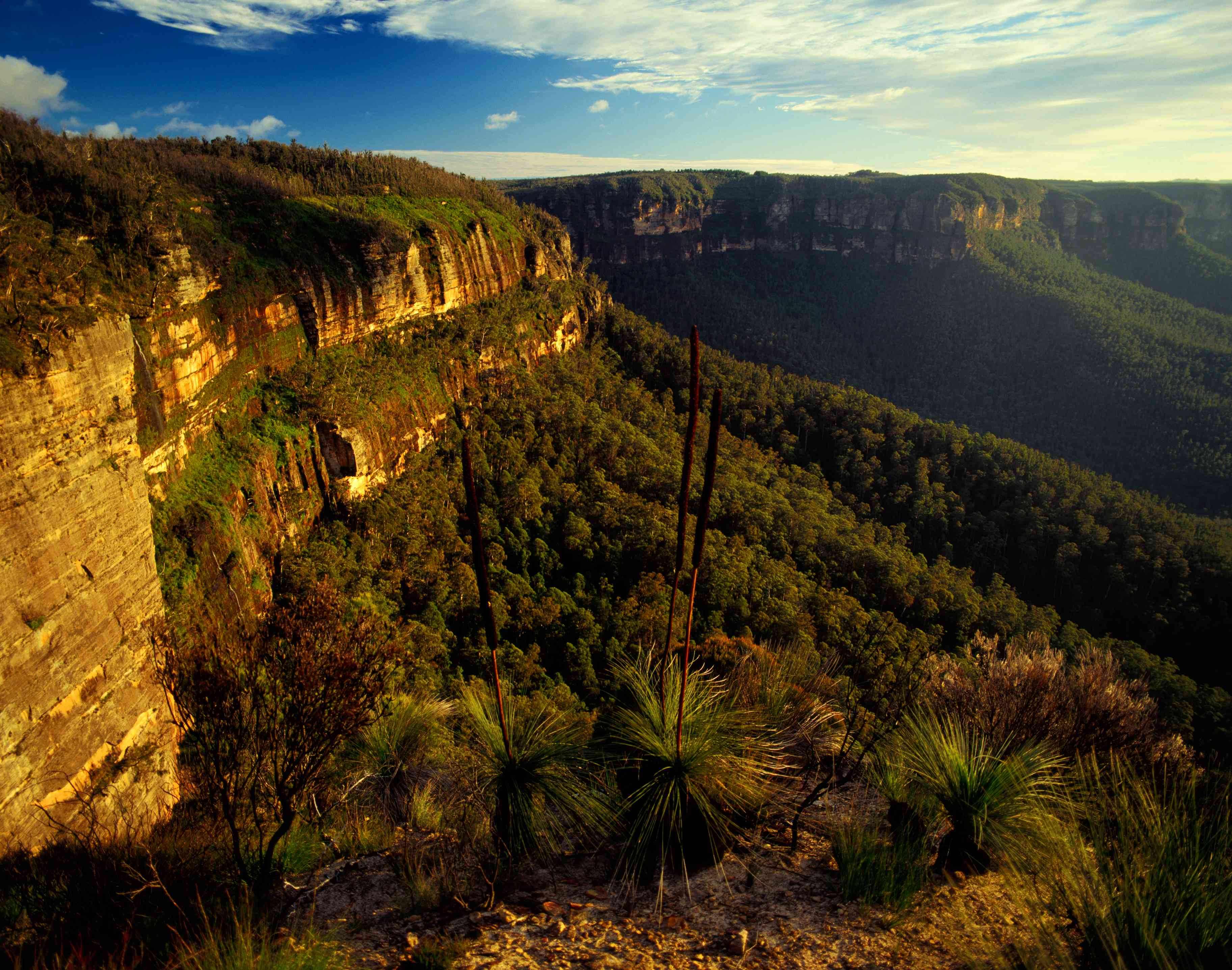 Grass Trees and escarpment from Evans Lookout in the Blue Mountains National Park.