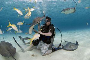 Diving at Stingray City, Grand Cayman