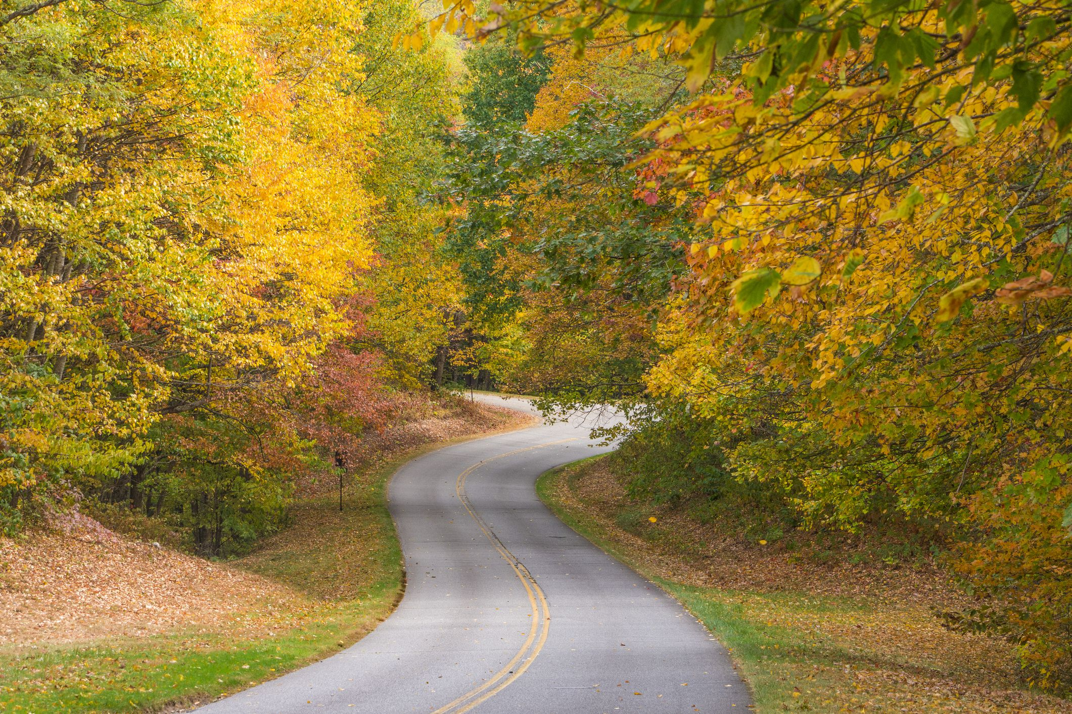 Autumn Country Road in Tennesse during autumn