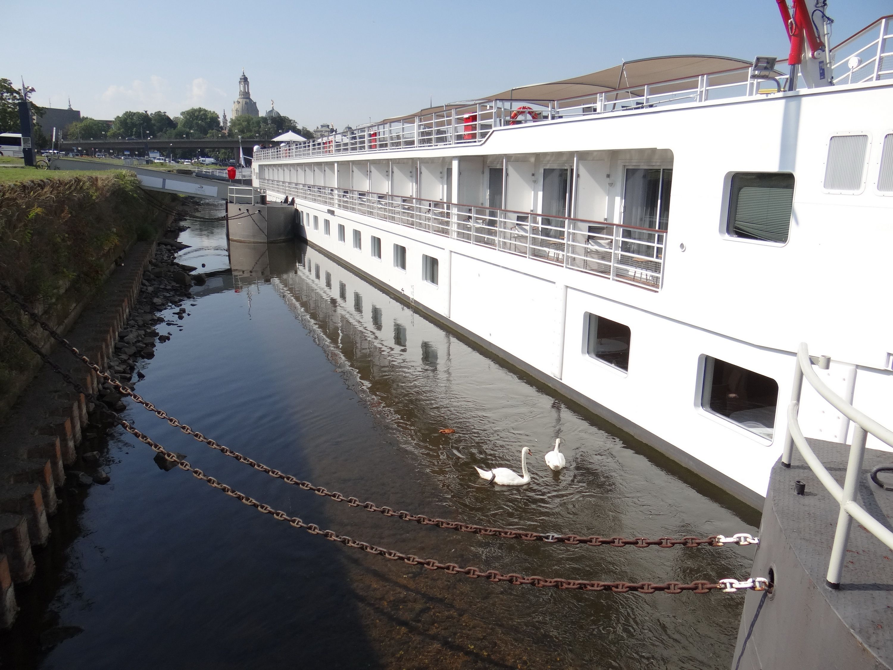 Swans and the Viking Beyla on the Elbe River in Germany