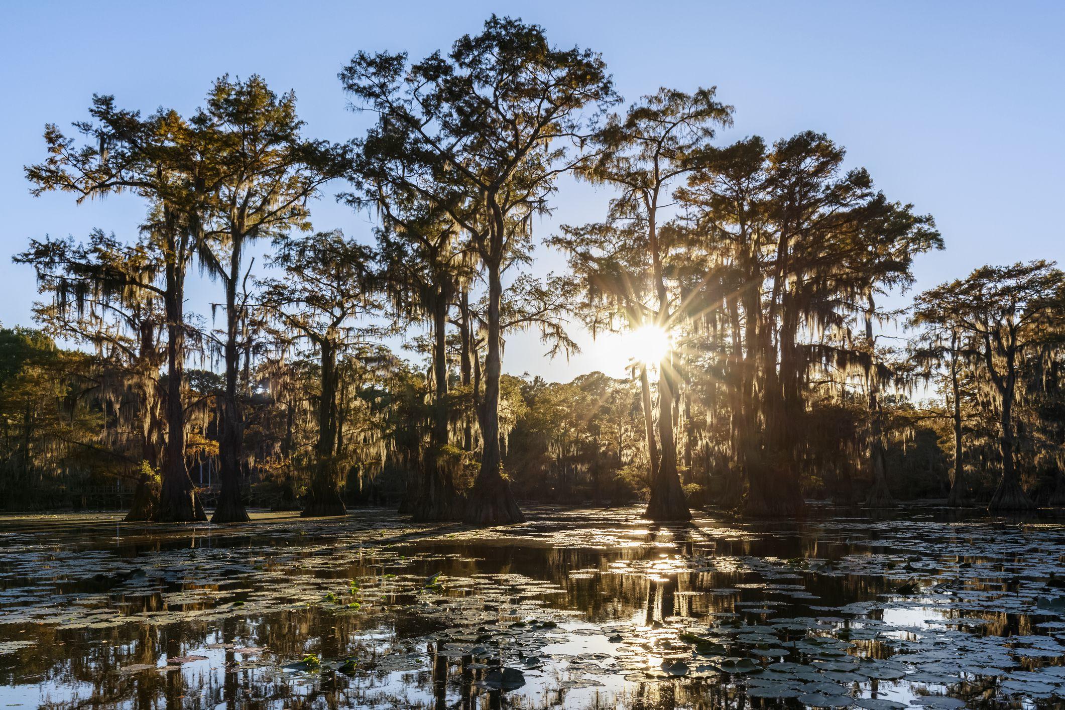 USA, Texas, Louisiana, Caddo Lake State Park, Saw Mill Pond, bald cypress forest