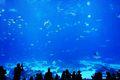 Crowd watching sealife at the Atlanta Aquarium