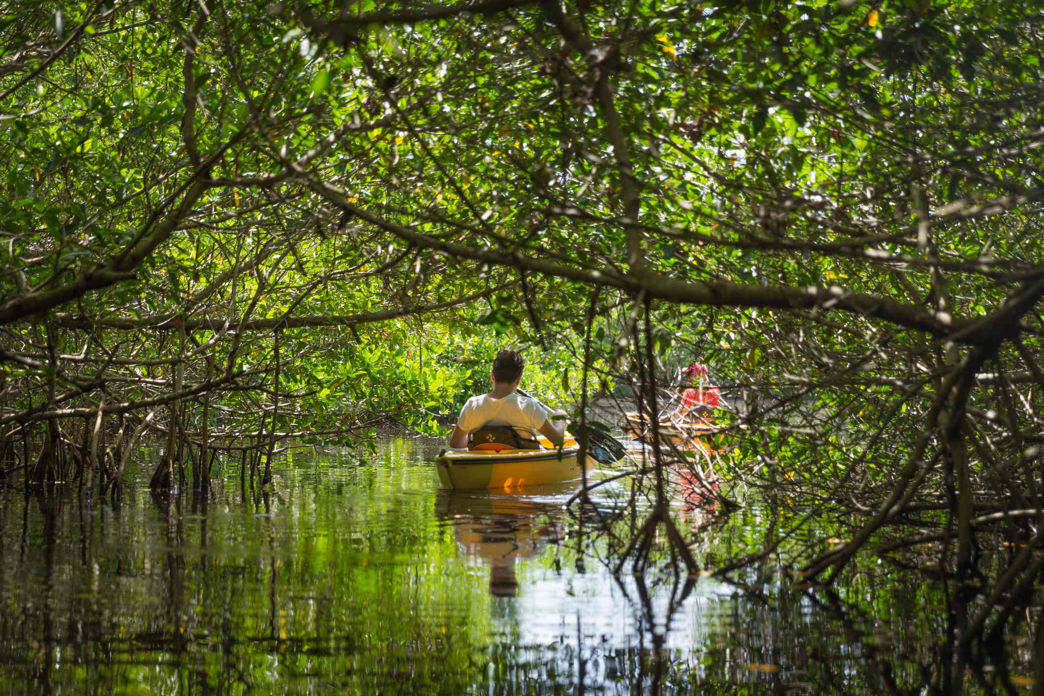 Tourist kayaking in mangrove forest in Everglades, Florida,