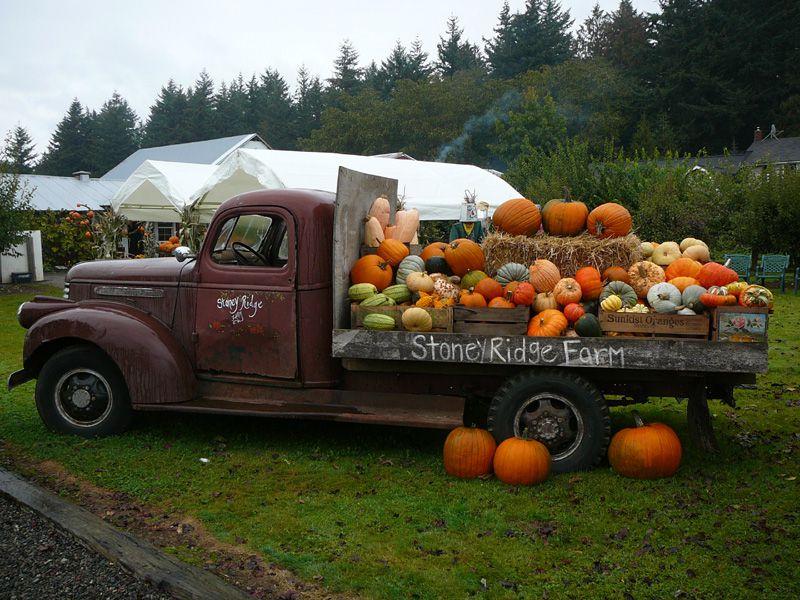 Harvest Festival at Stoney Ridge Farm
