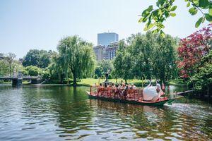 Duck boat in boston public garden