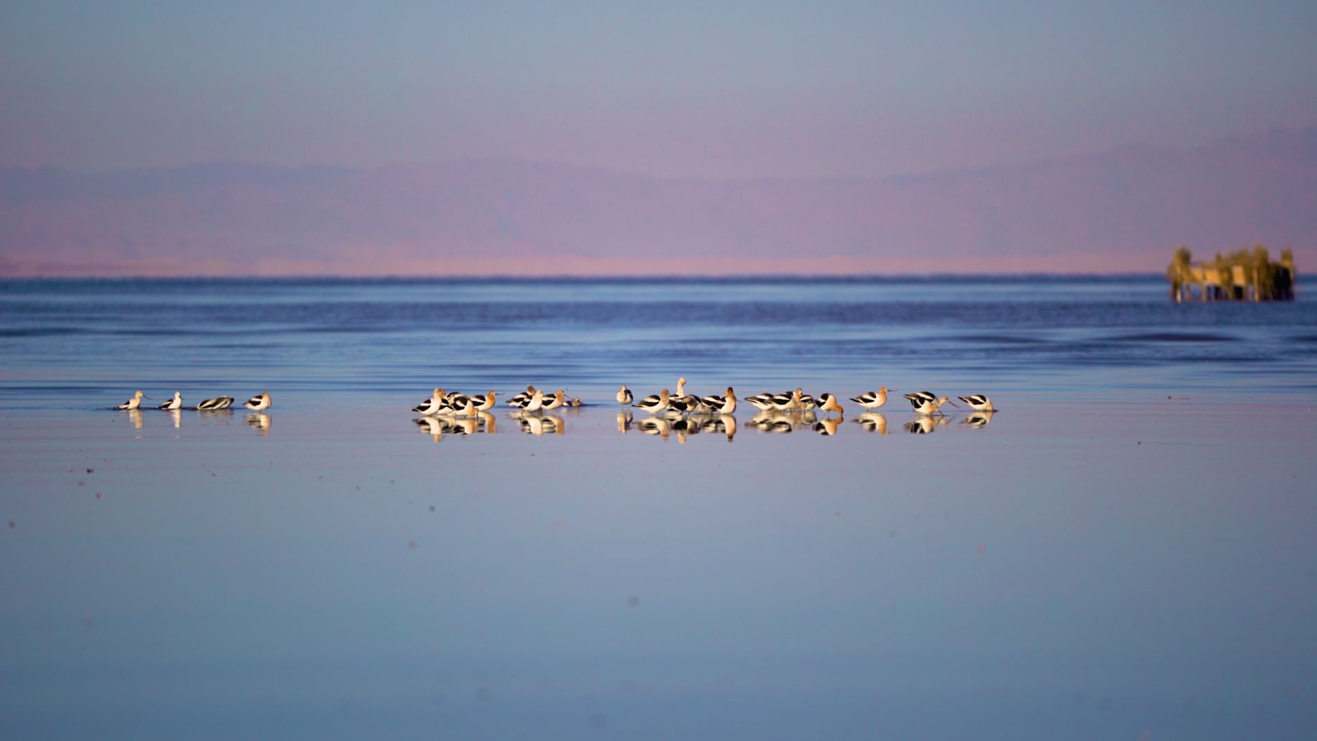 flock of birds sitting on water at sunset