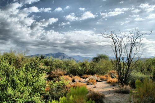 Carefree Desert