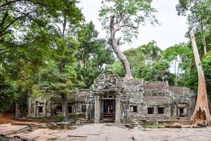 TaProhm temple in Angkor Wat