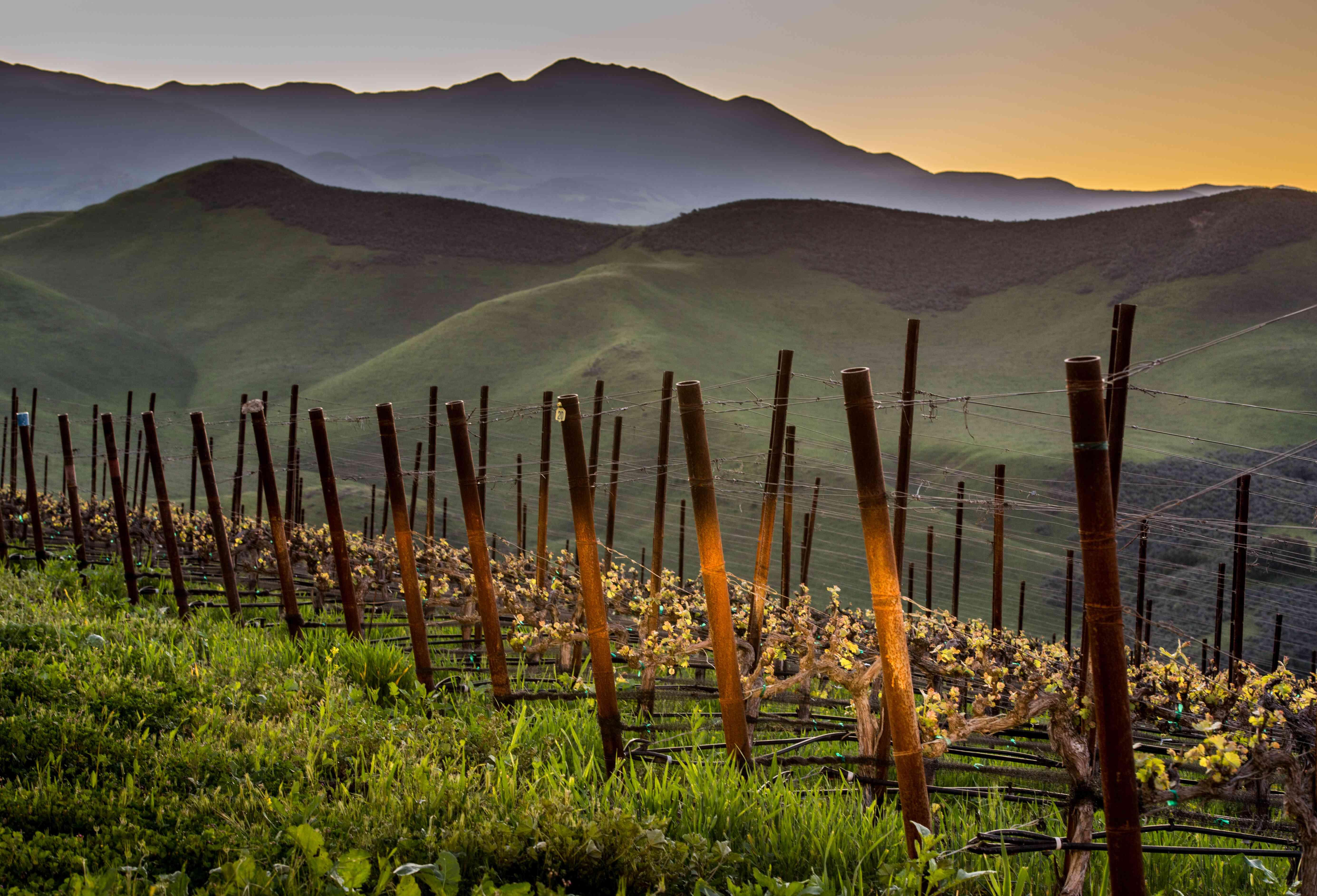 La primavera llega a la región vinícola de Santa Bárbara
