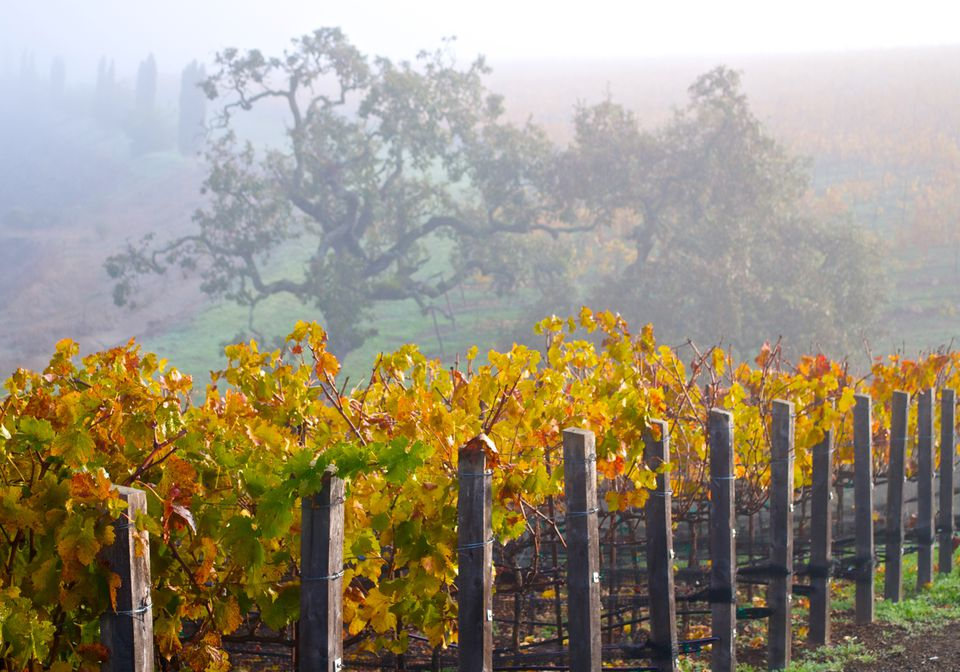 Foggy Day in Napa Valley