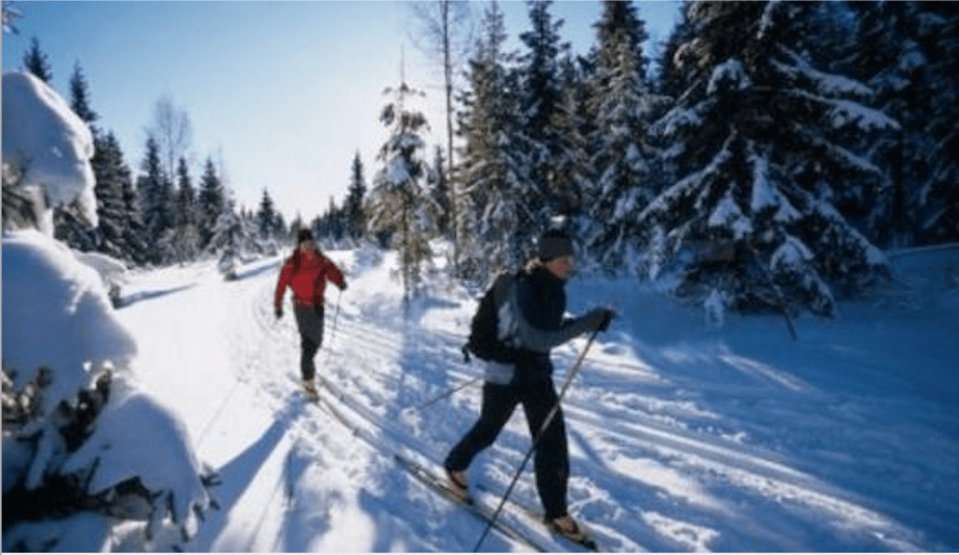 Two people cross country skiing with evergreen trees in the background