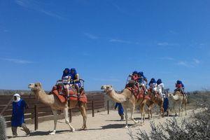 Riding camels in Los Cabos