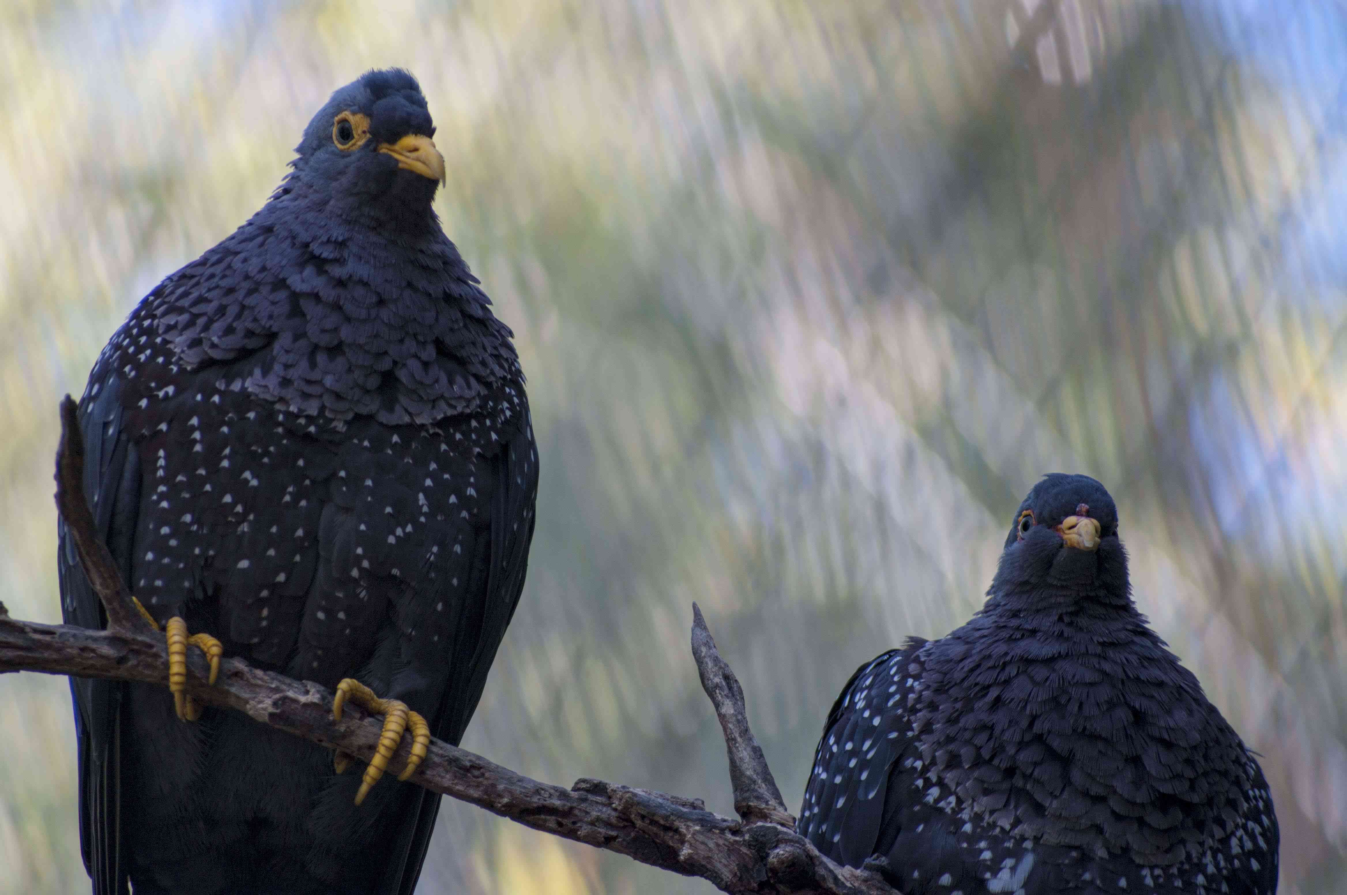 Exotic Birds at the San Diego Zoo