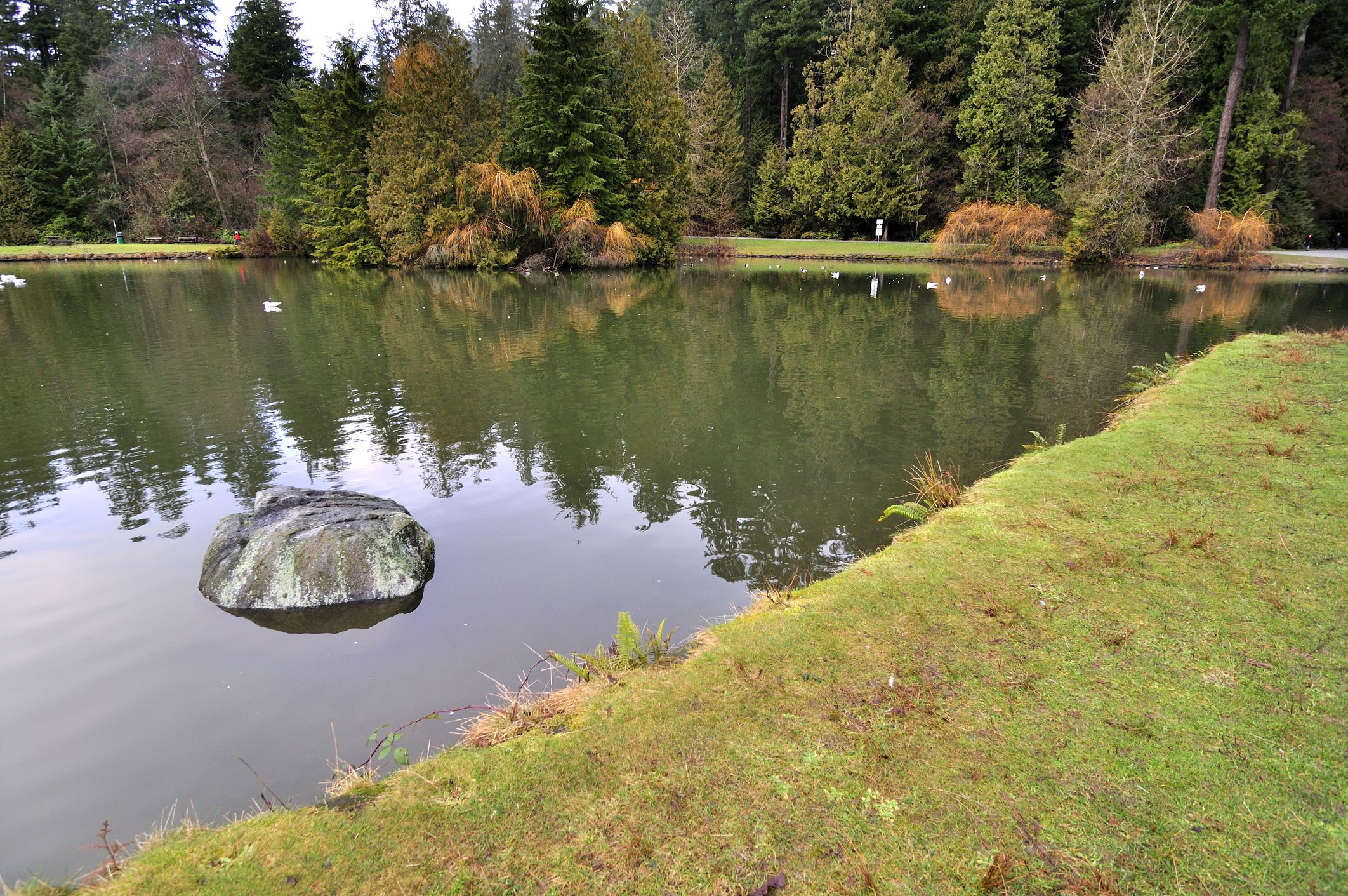 Lake in Central Park, Burnaby, British Columbia