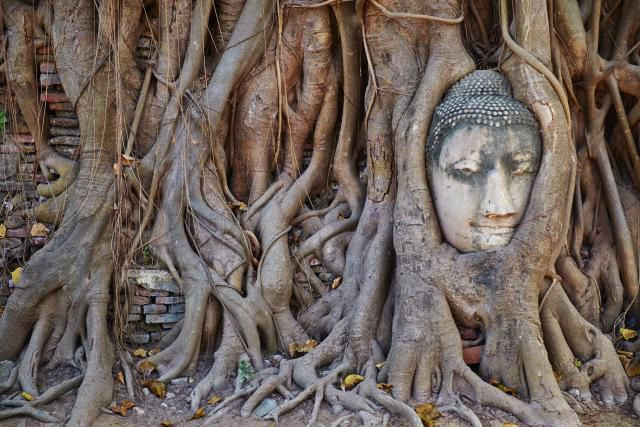 Stone Buddha head entwined in the roots of a fig tree, Wat Mahatat, Ayutthaya Historical Park, UNESCO World Heritage Site, Ayutthaya, Thailand