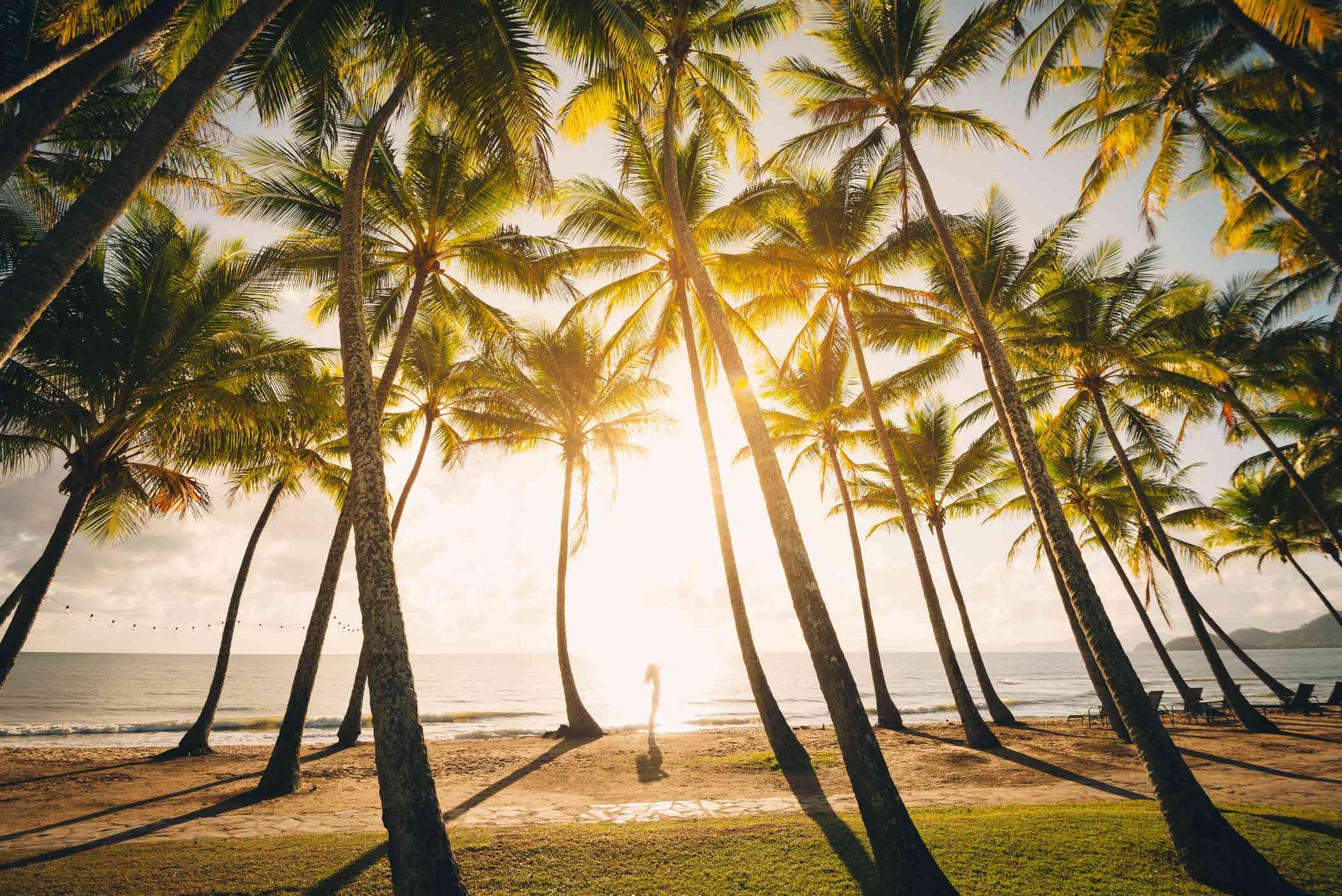 Sunrise through palm trees at Palm Cove