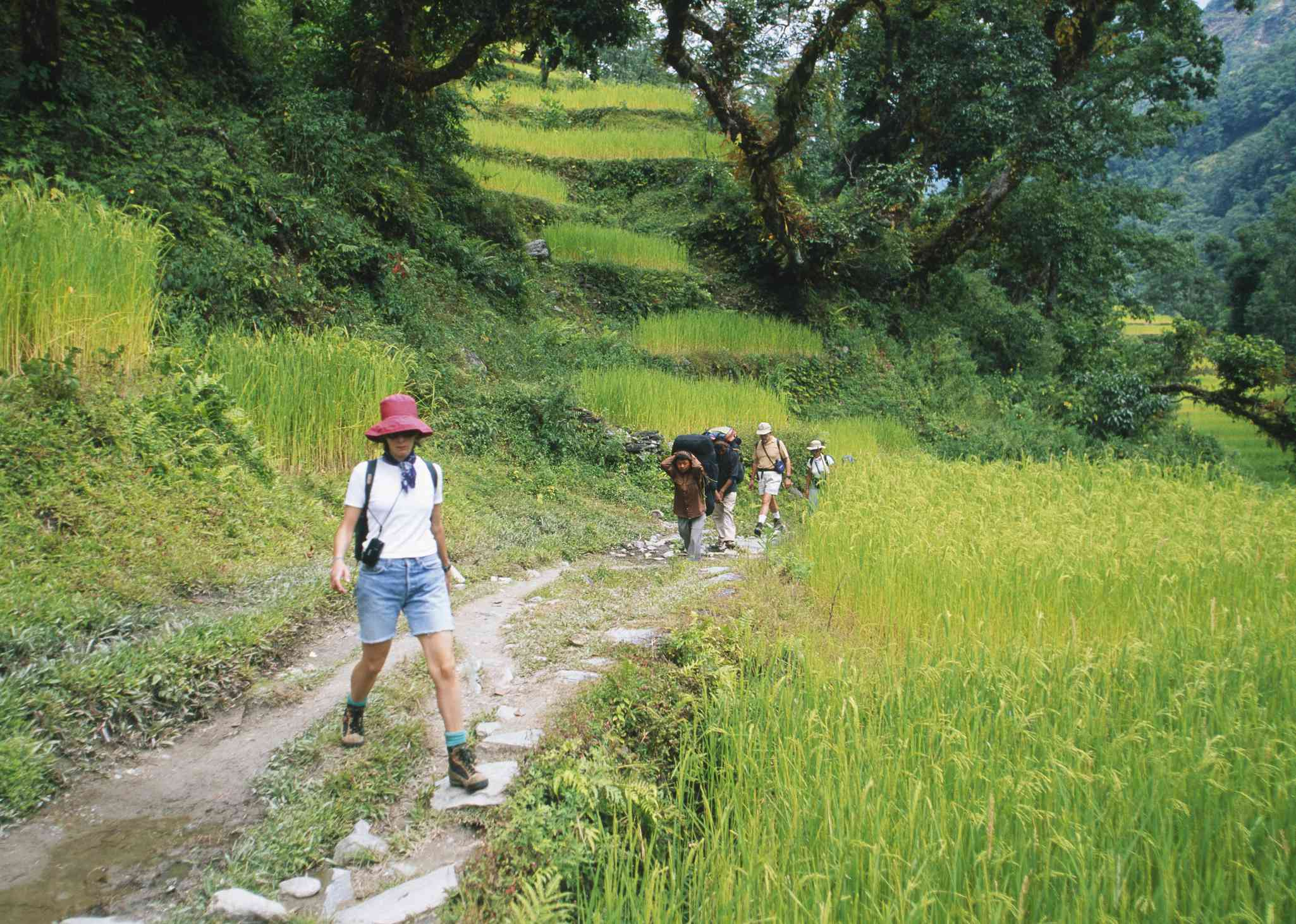 tourists walking along a path with terraced green rice paddies around