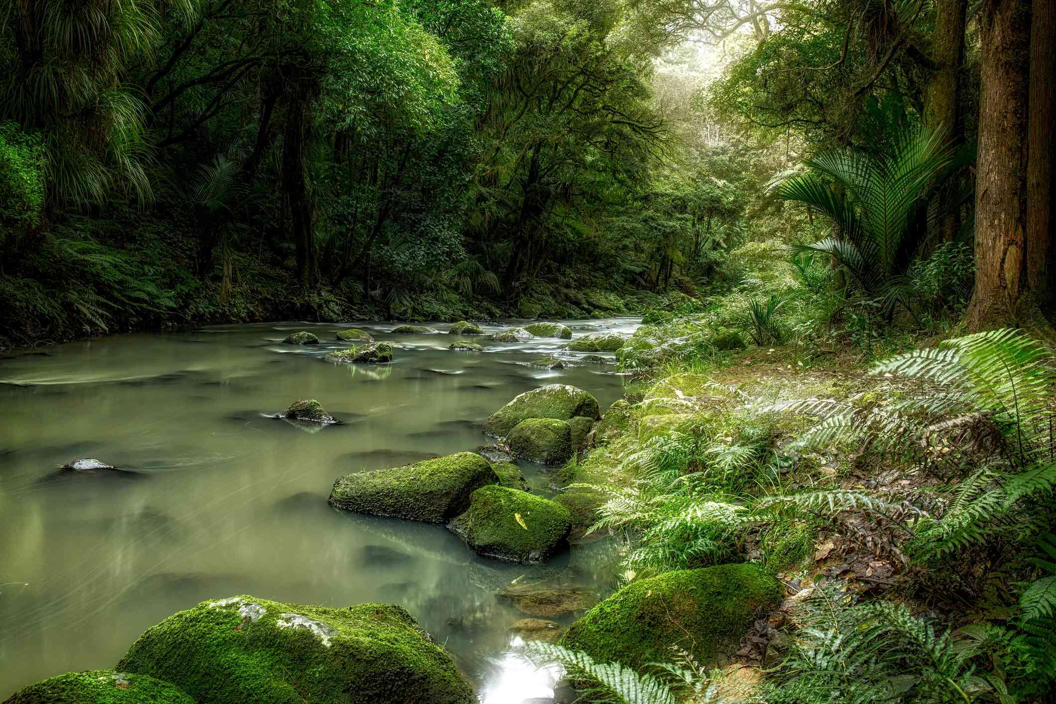 Hatea River. Photo: