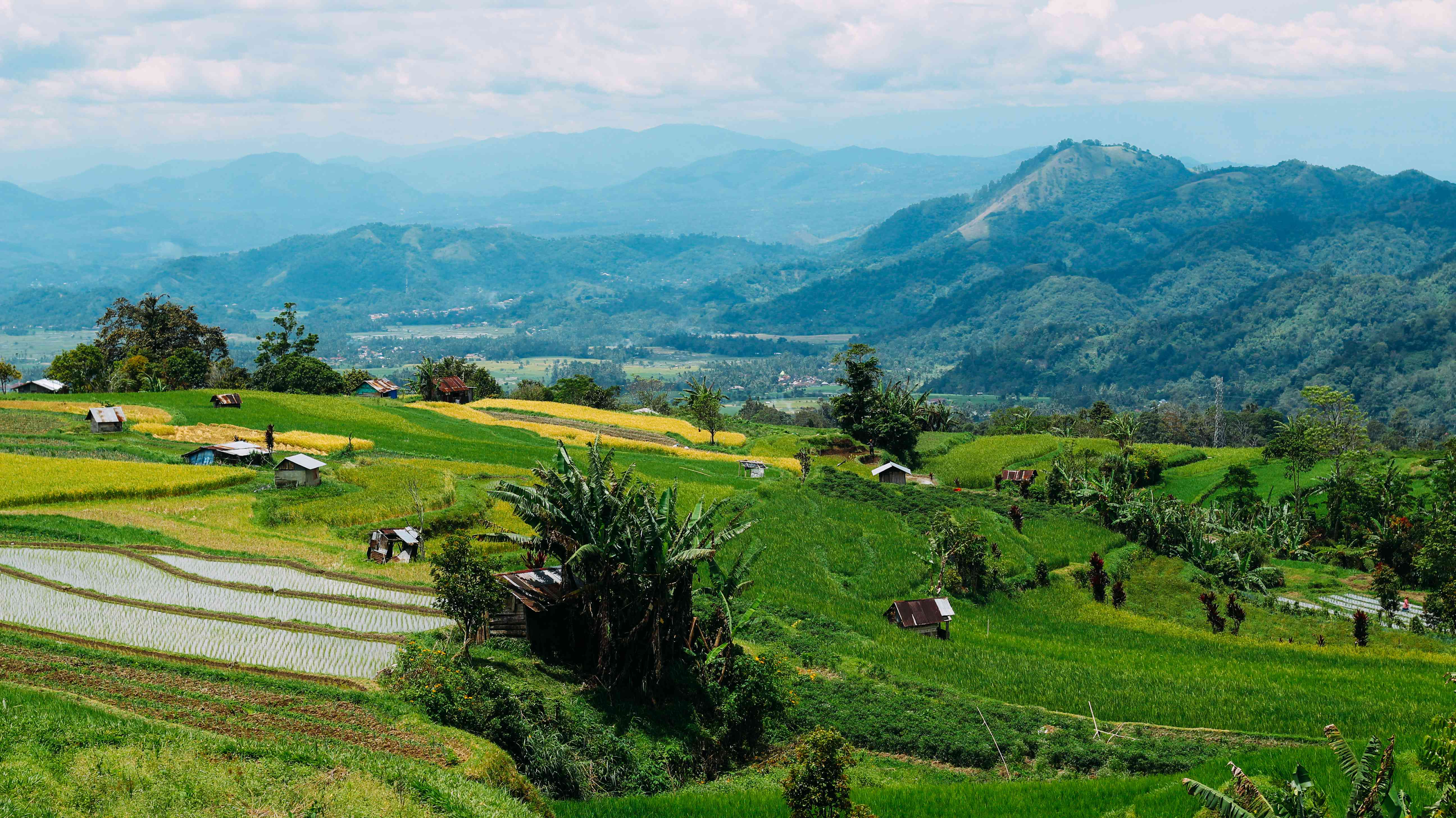 Green fields and hills in Sumatra