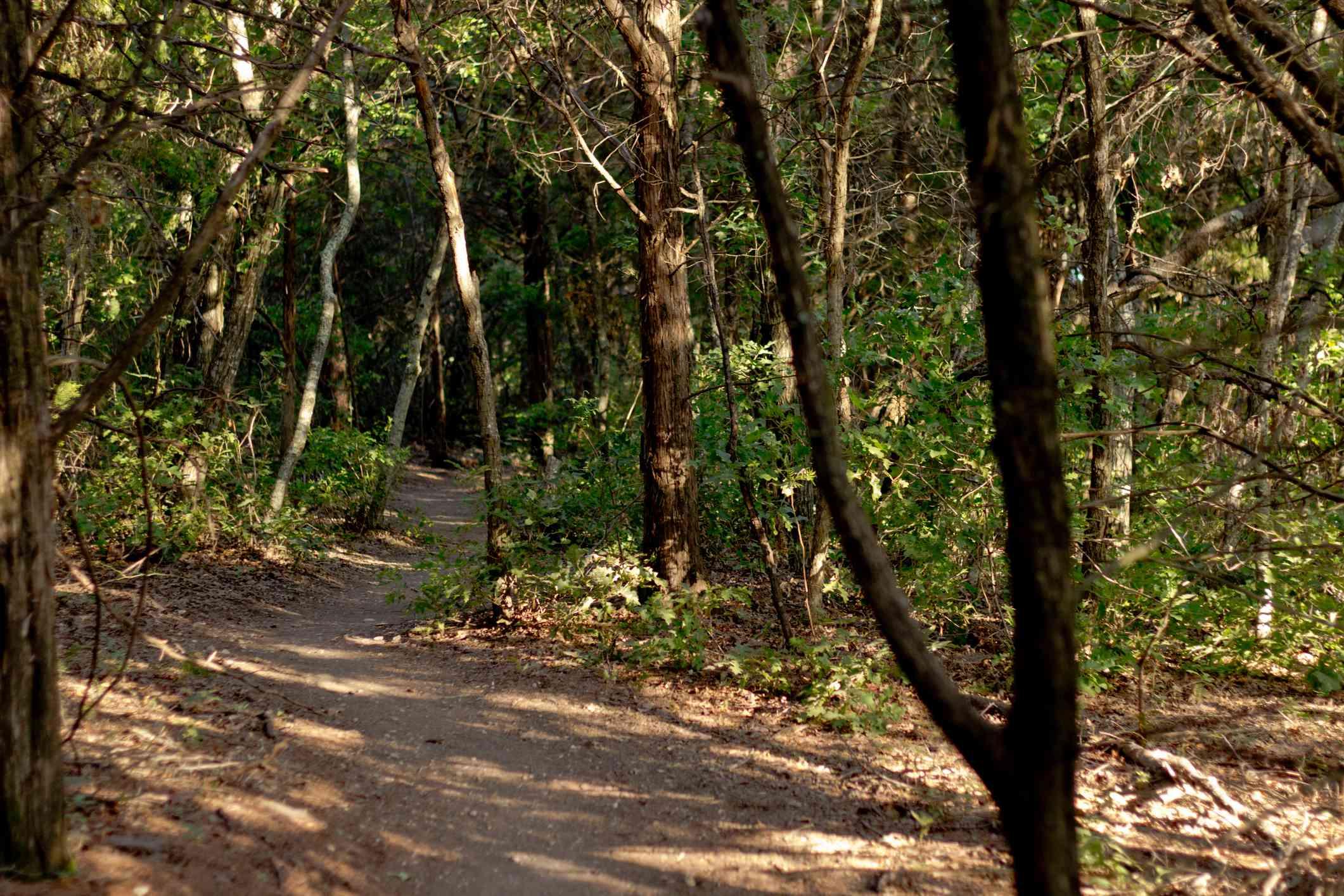 Footpath Amidst Trees At Cedar Ridge Preserve