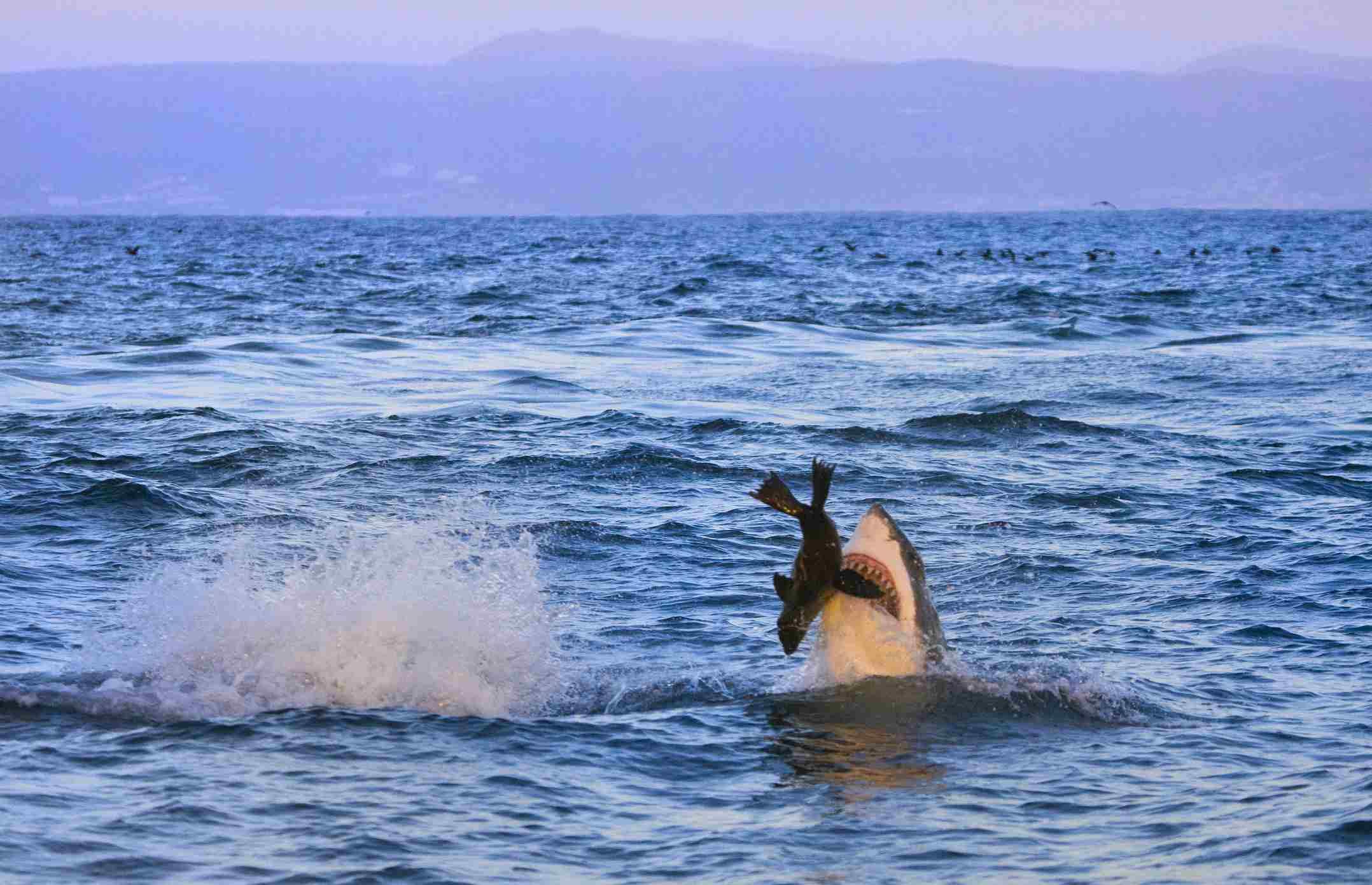 Five Reasons Travelers Shouldn't Fear Sharks