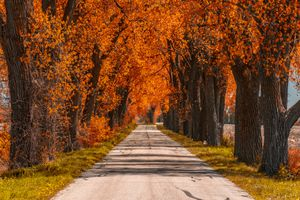 Path with fall colors