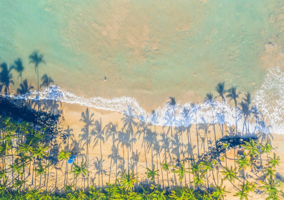 Arial view of palm trees on a beach on Maui