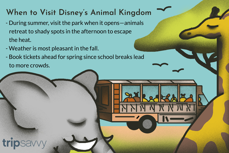 illustrated tips for Disney's Animal Kingdom