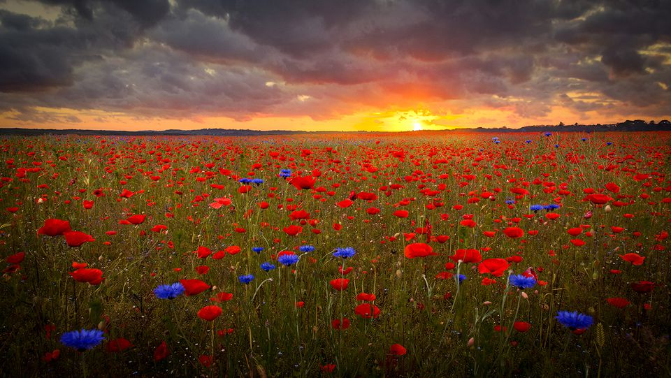 the sky with a field of blue and red flowers