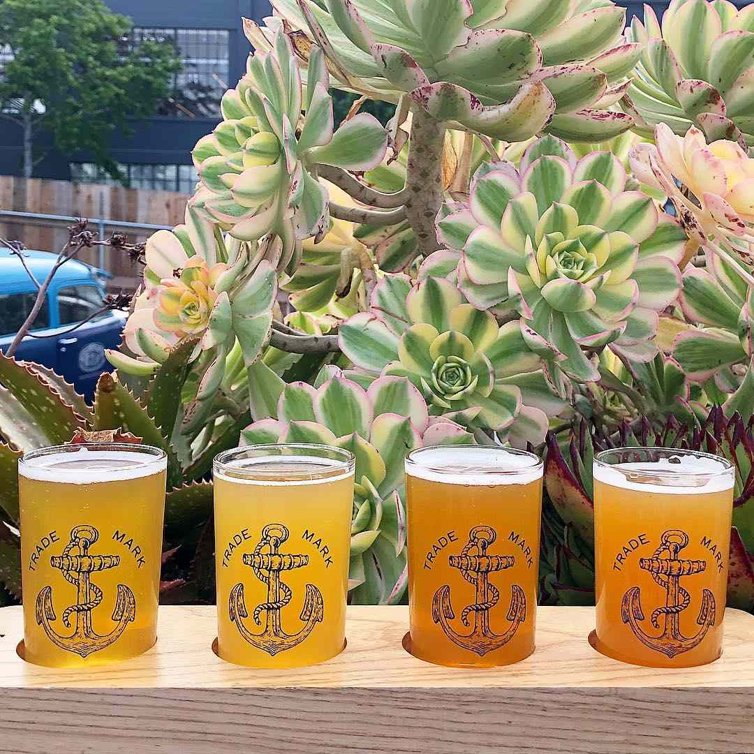 Flight of beers from Anchor Brewing