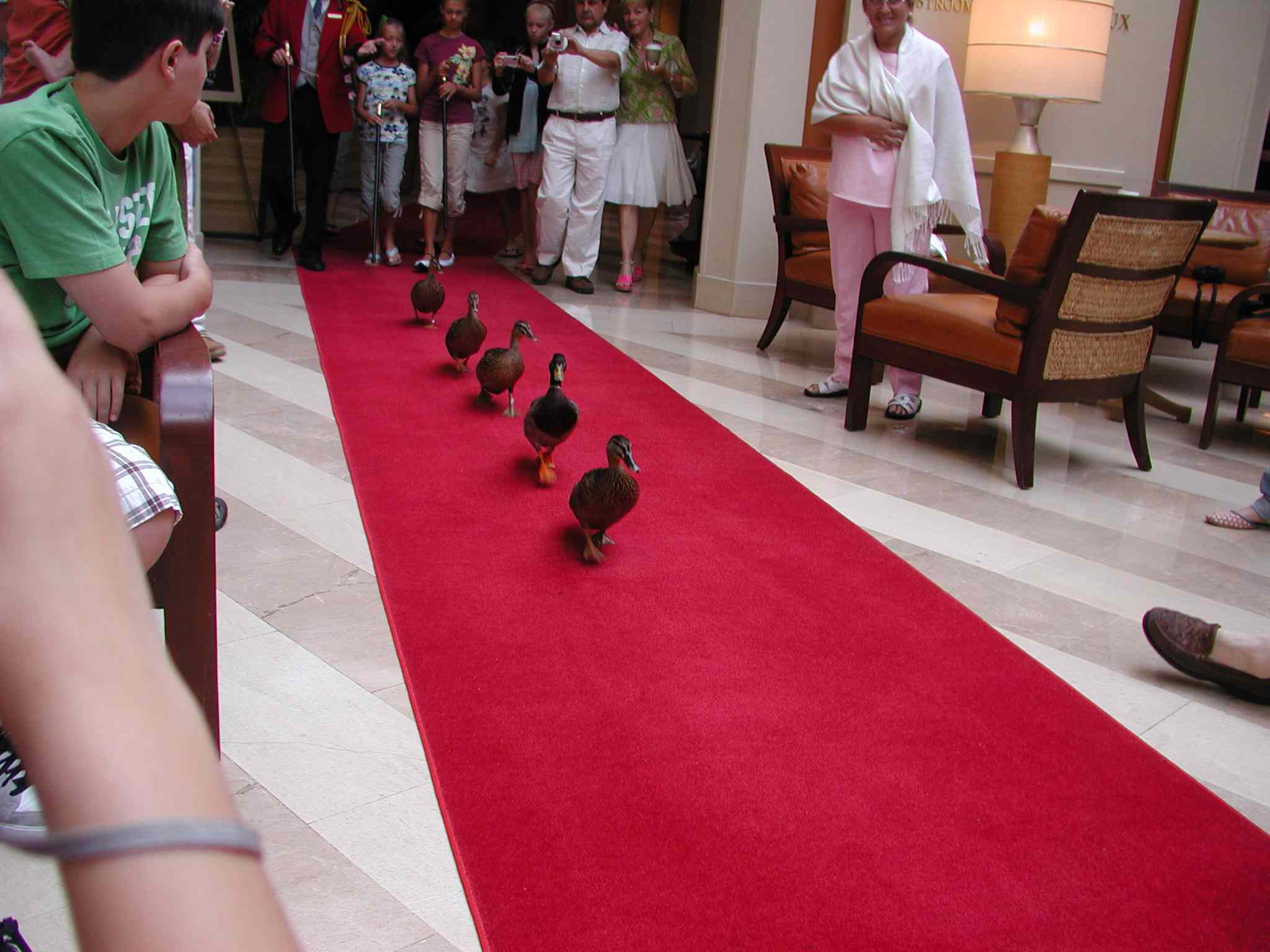 Peabody Ducks March