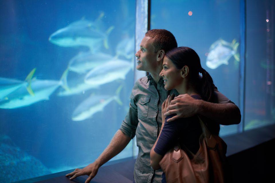 couple at the national aquarium