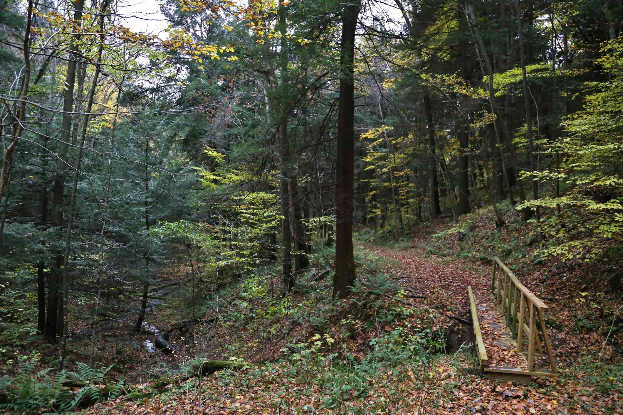 Woods and a hiking trail