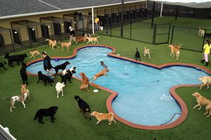 Dogs in a bone-shaped pool