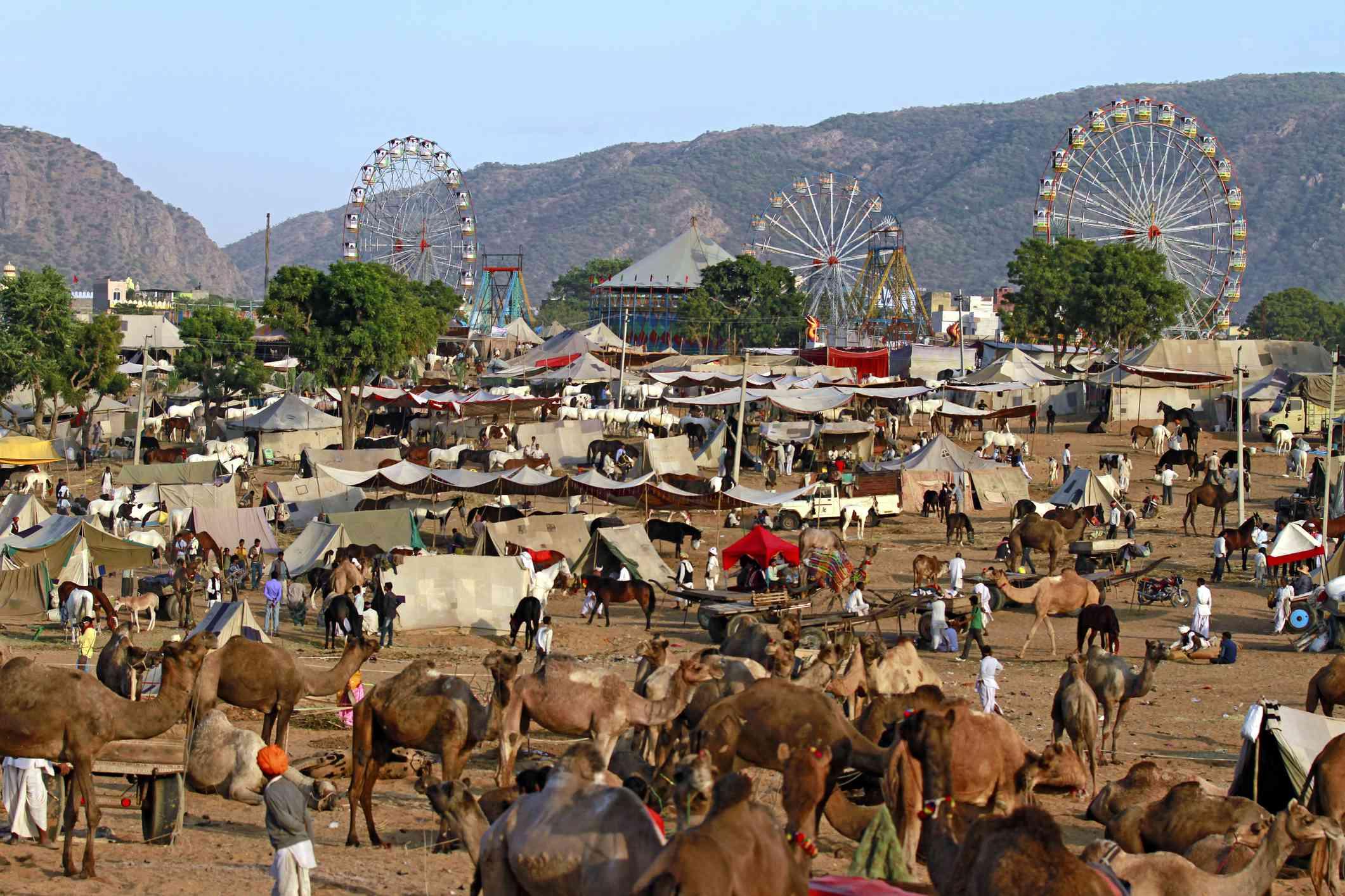 Image result for pushkar camel fair