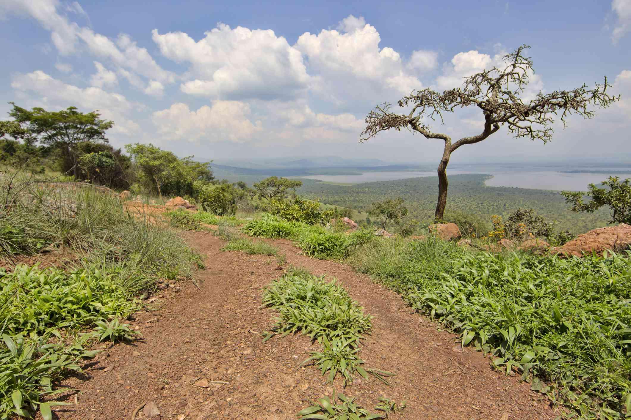 Rural trail, Rwanda