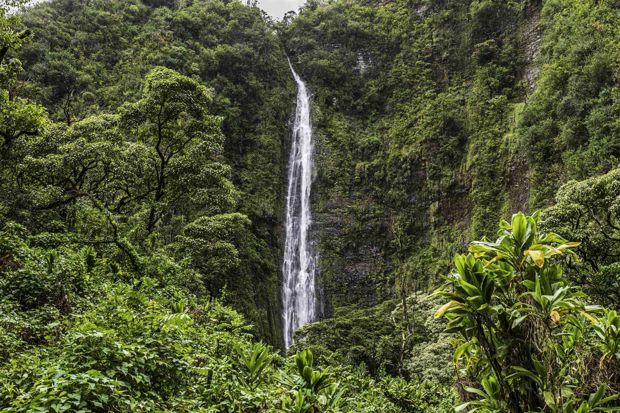 Waimoku falls at Pipiwai Trail, Maui, Hawaii