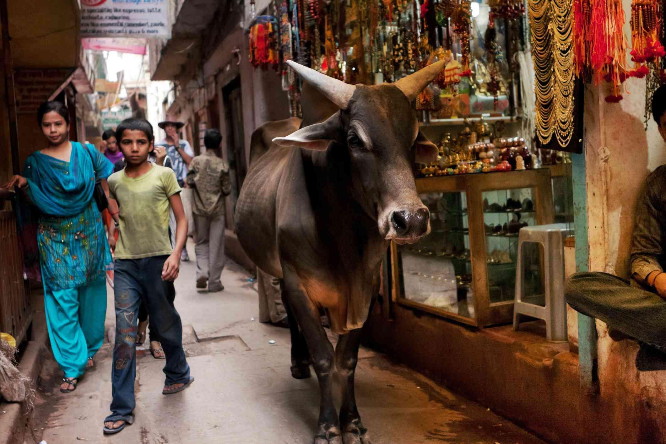 Varanasi street.
