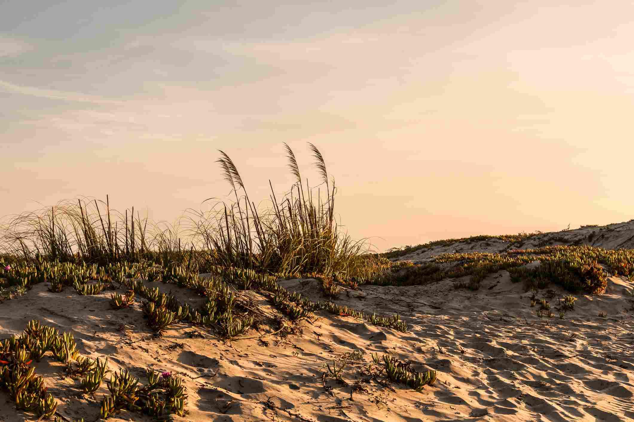 Dunas de arena en la playa de Coronado en San Diego