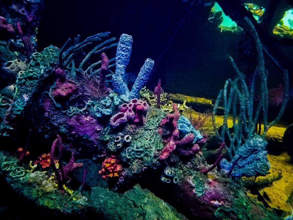 Arrecife de coral en el acuario nacional