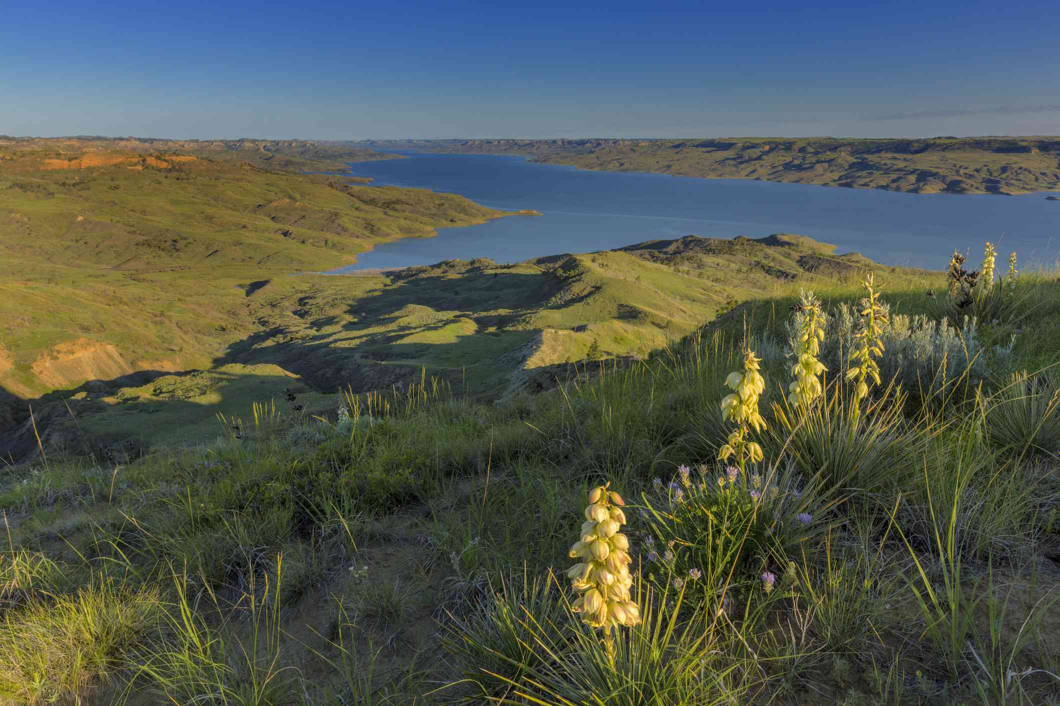 Plain landscape with lake and yucca (Yucca) flowers in foreground, Fort Peck Reservoir, Charles M. Russell National Wildlife Refuge, Montana, USA