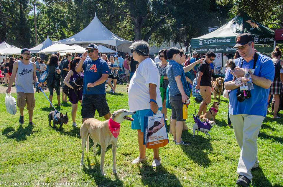 Bark In The Park San Jose, 2015