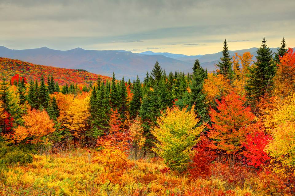 Peak fall foliage in New Hampshire's White Mountains