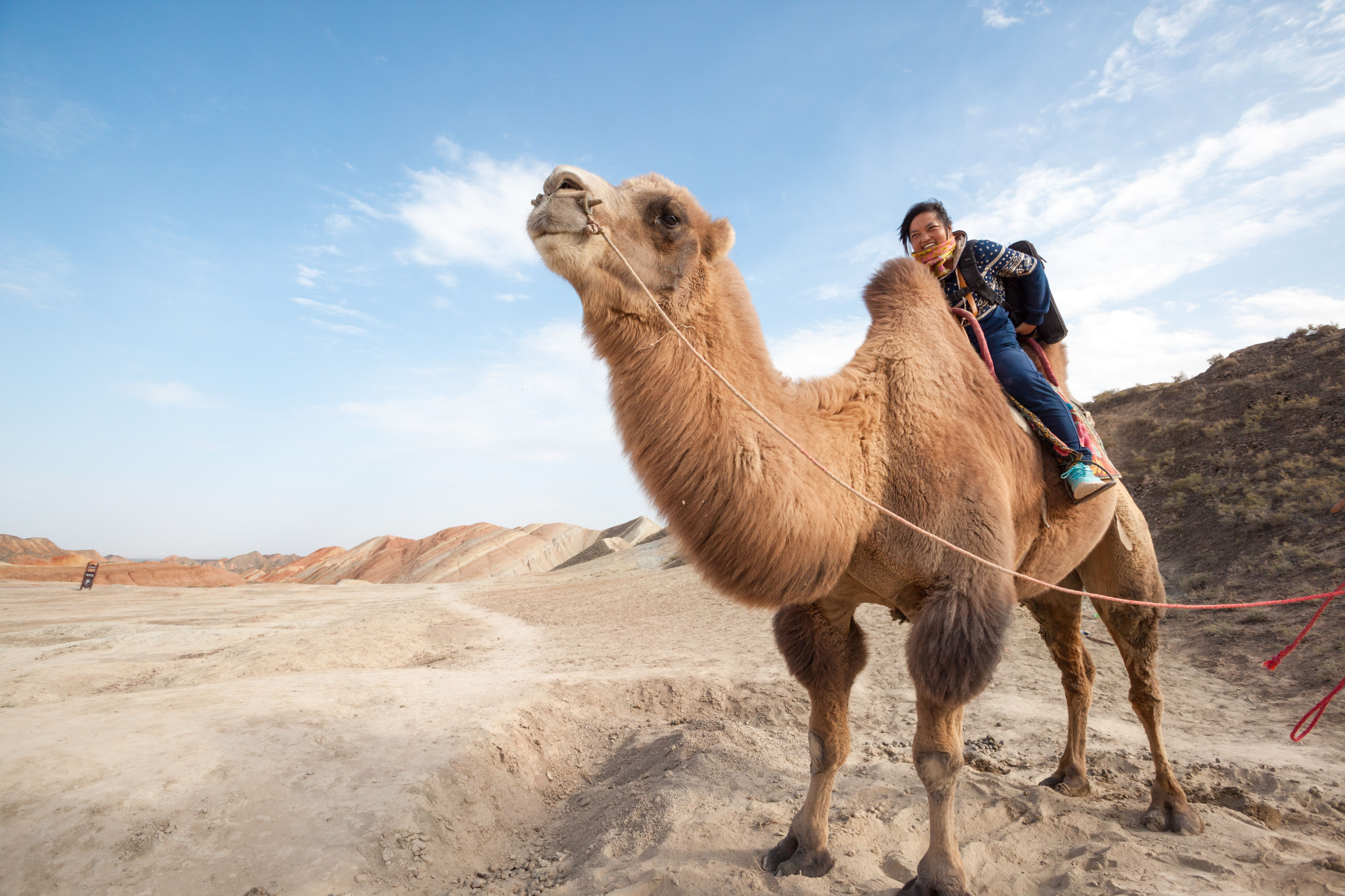 Young woman riding a camel in the desert of China