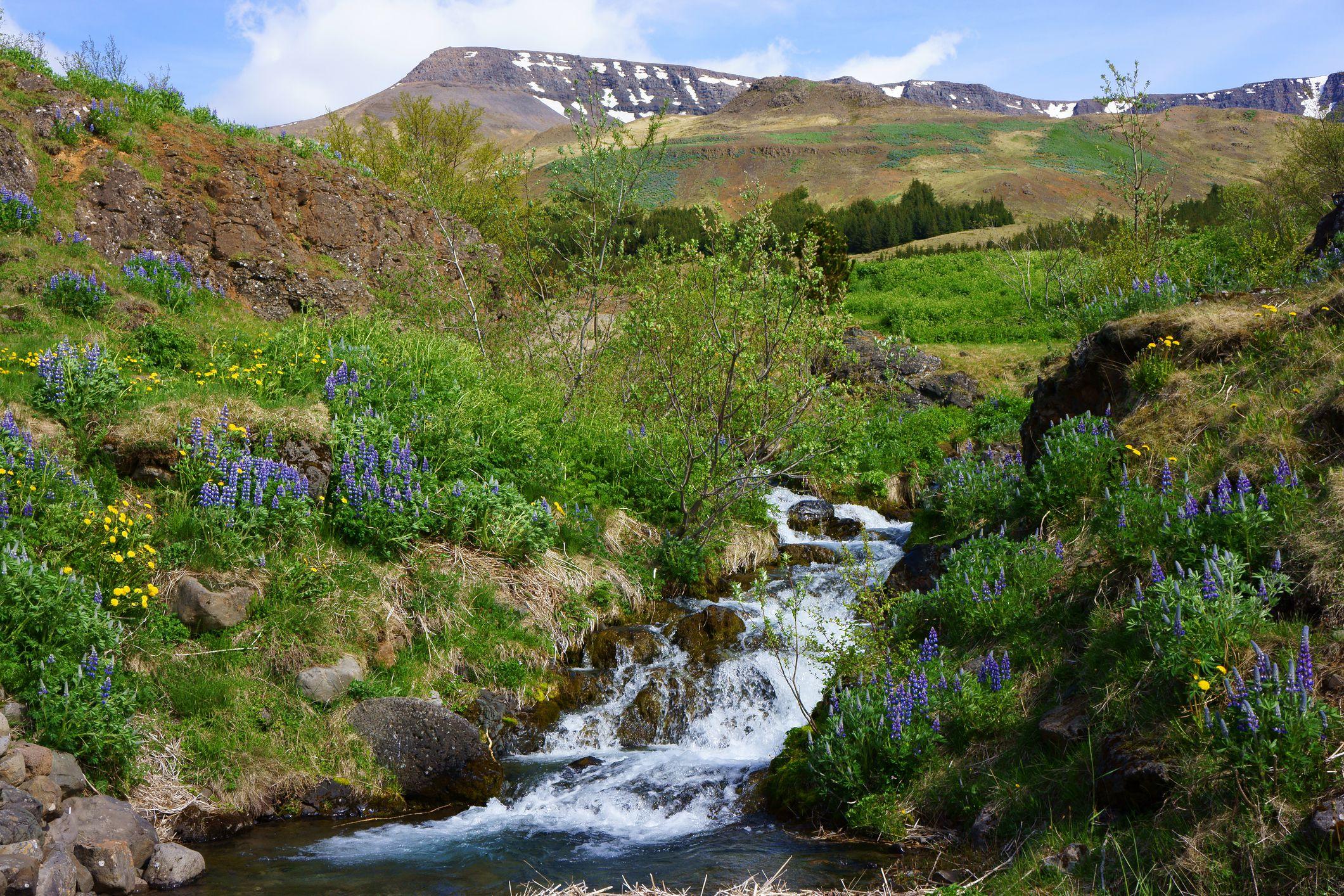 Creek on Esja mountain, Iceland