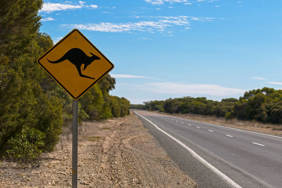 Kangaroo crossing road sign next to road on Princess Highway
