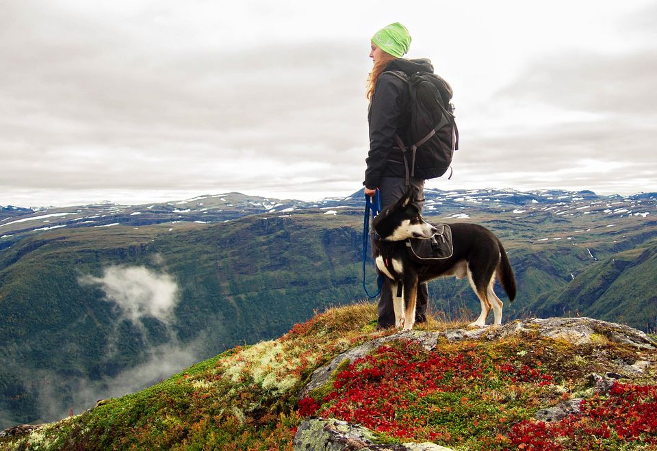 Person hiking with dog in Norway