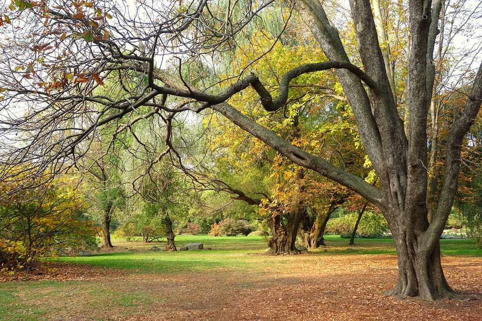 Free museums and free admission days in brooklyn - Brooklyn botanical garden free admission ...