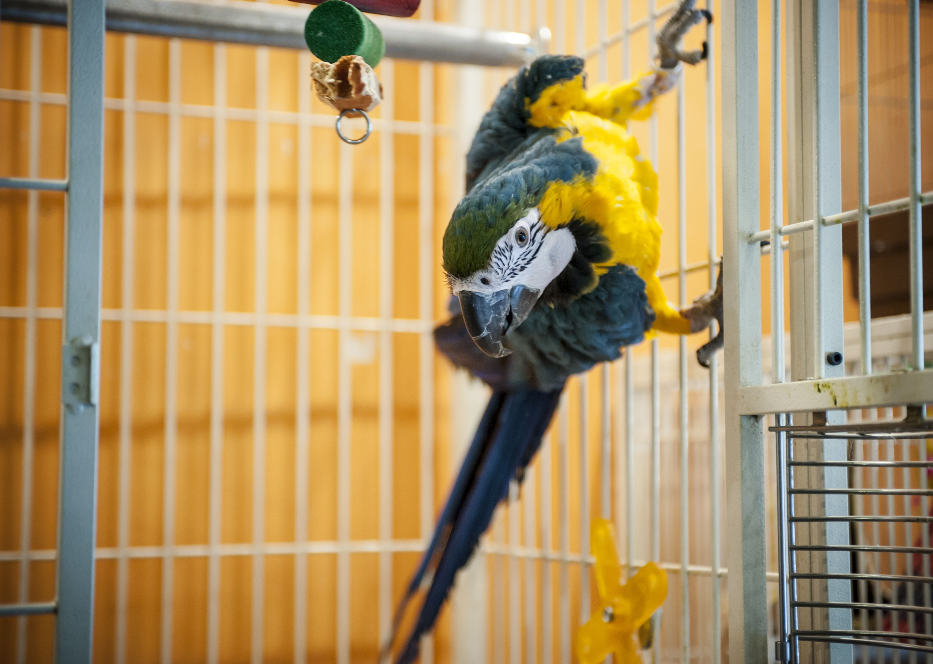Pet Birds And Air Travel What You Need To Know